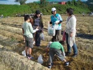 201210芋掘り