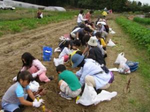 20081123芋掘り