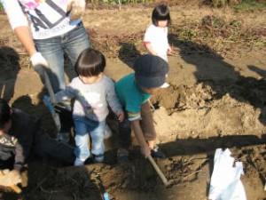 20091123幼児芋掘り